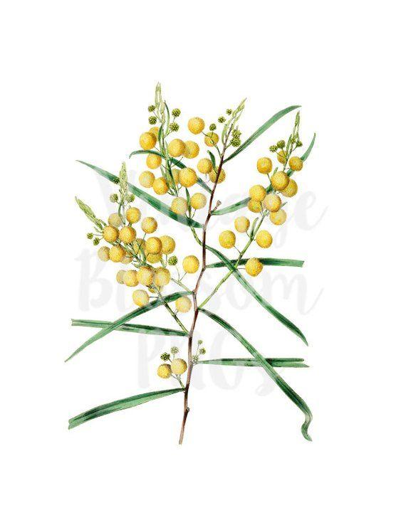Yellow Flower Clipart Illustration Clipart Flower Digital