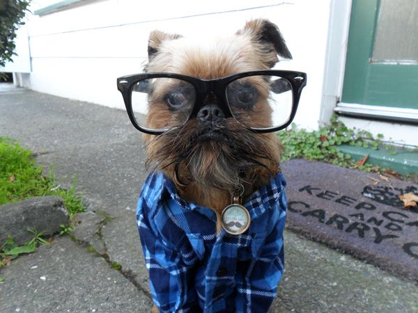 Best 25 Hipster Dog Ideas On Pinterest Chihuahua