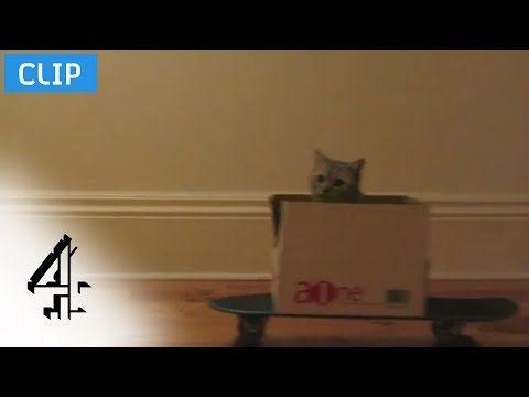 Politics vs. Cat Videos   Alternative Election   Channel 4 - http://aobcat.com/2016/07/09/politics-vs-cat-videos-alternative-election-channel-4/