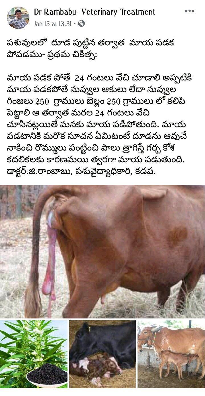 Pin by Sivarama Krishna on గోమాత in 2020 Veterinary