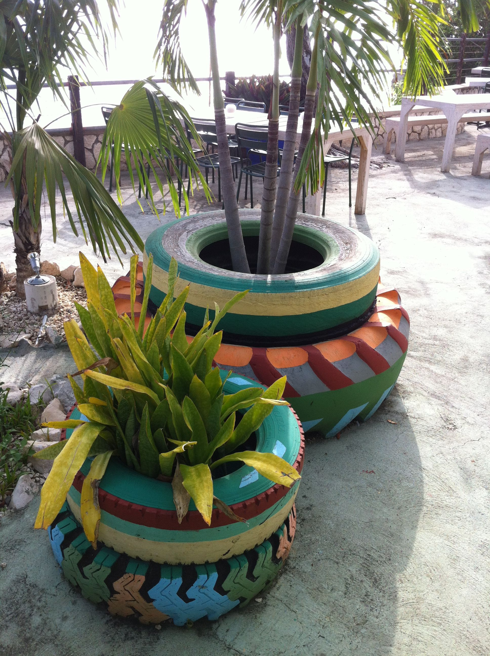 tire planters, Jamaica | Tire planters, Planters ...