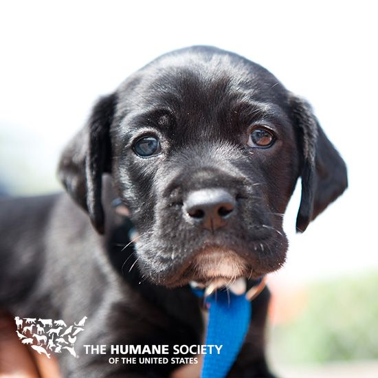 The Humane Society Of The United States Publishes Three Bimonthly