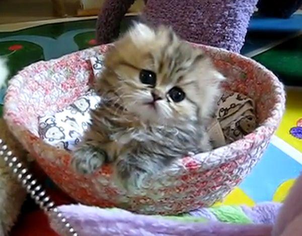 Index Of Uploads 2011 08 Kittens Cutest Cutest Kittens Ever Cute Cats