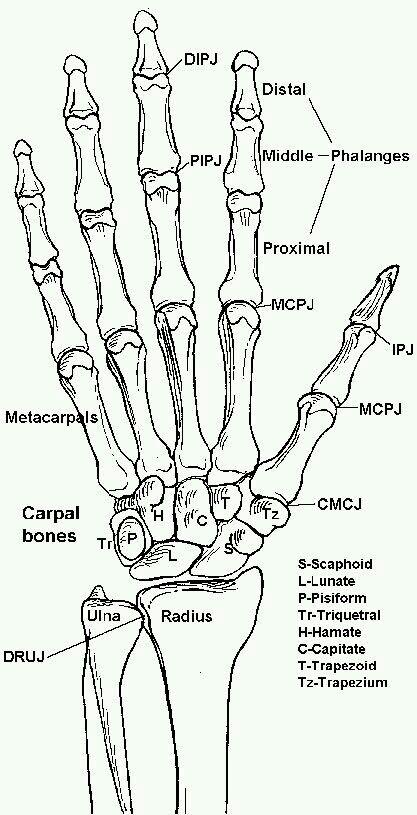 Pin by Maddi Williamsen on Nursing | Pinterest | Medical, Anatomy ...