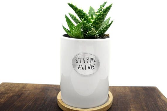 Housewarming Gift Succulent Planter Funny Quote Staying Alive Gardening Quote Green Thumb Succulent Planter Garden Quotes House Warming Gifts