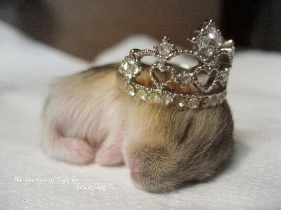 Cute Emergency On Baby Hamster Cute Hamsters Cute Baby Animals