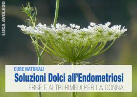 I fitoterapici e i nutraceutici che aiutano contro l'endometriosi