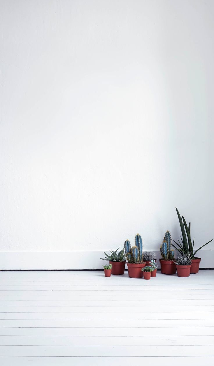 Pin By Florence Rosa On Parenthood Minimalist Wallpaper Plants