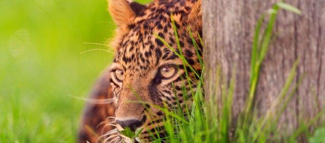 Fotos De Animales Salvajes Para Fondo De Pantalla: Fondo-pantalla-animal-salvaje-105