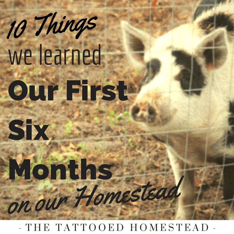 Pin by The Tattooed Homestead on Homesteading