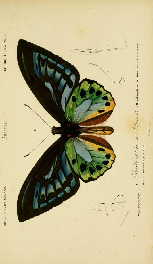 v. 2 1849 - Atlas (Zoologie - Reptiles, Poissons & Insectes) - Dictionnaire universel d'histoire naturelle : - Biodiversity Heritage Library... #insects