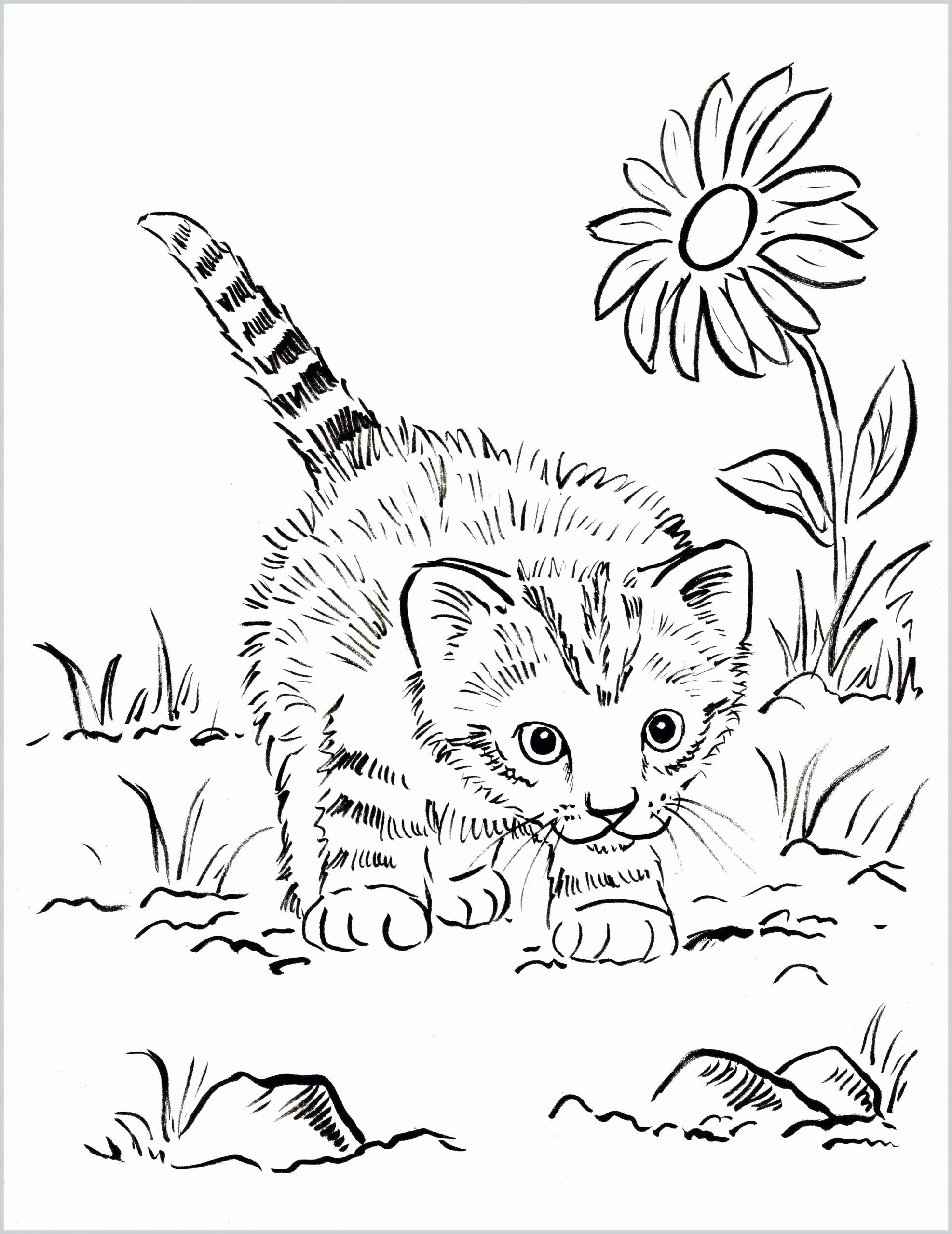 Coloring Sheets Of Cats Best Of Coloring Book Coloring Book Free Cat And Kitten Pages To Cat Coloring Book Kittens Coloring Puppy Coloring Pages
