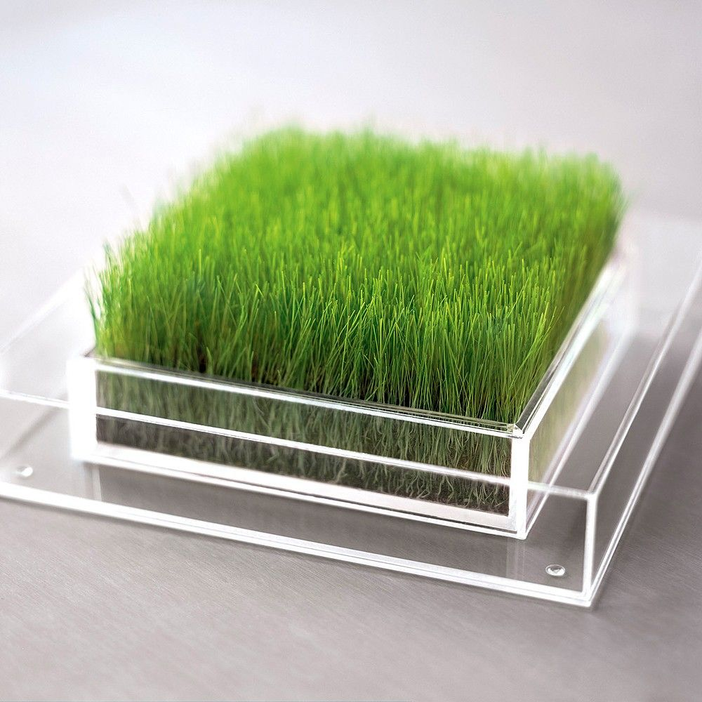 Must have for the grass office vinuesavallasycercados