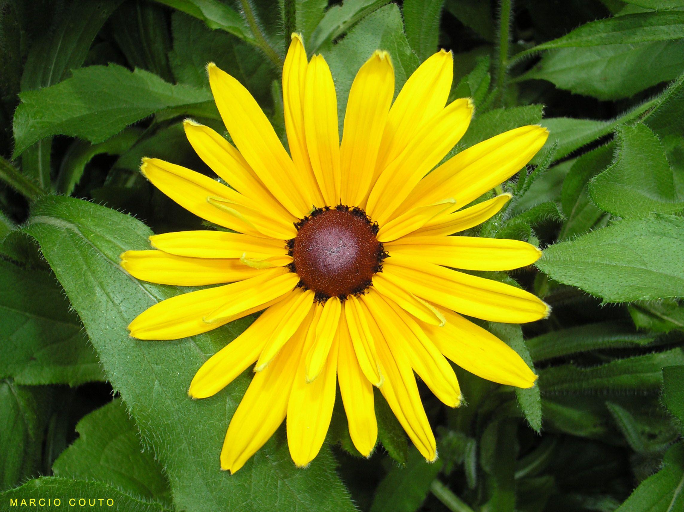 Flower Avatars Free Flowers Green Desktop Wallpaper Yellow Uploaded By Marcio