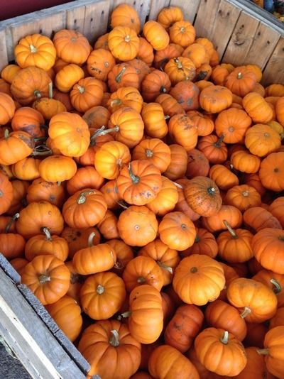 Baby Pumpkins With Images Pumpkin Fall Pumpkins Fall Harvest