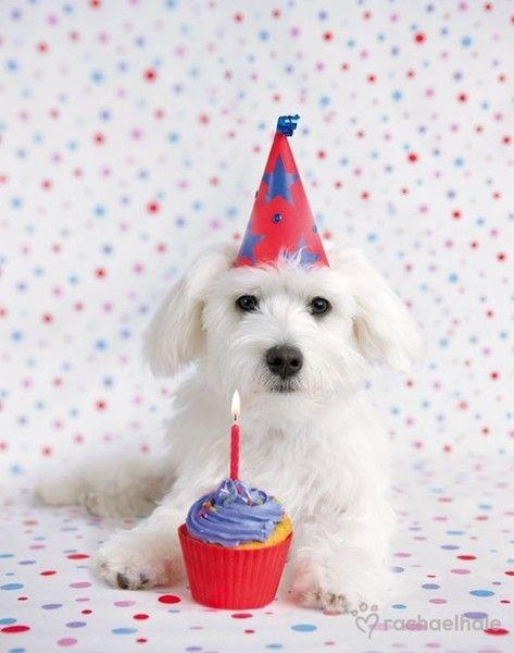 Make A Wish Dog Birthday Pictures Dog Birthday Dog Birthday Party