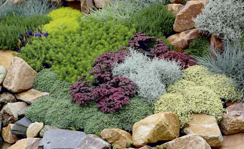 Bodendecker pflanzen, pflegen und Tipps Bodendecker - bauerngarten anlegen welche pflanzen
