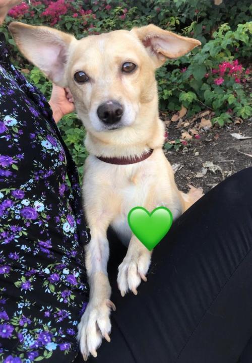 Adopt Camryn on Dog adoption