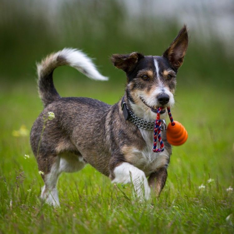 Pet acupuncture how alternative treatments can help your