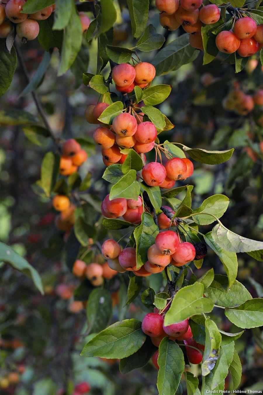 Le Jardin Du Bois Marquis Dans L Isere Arbuste Jardins En Bois Arbres Et Arbustes