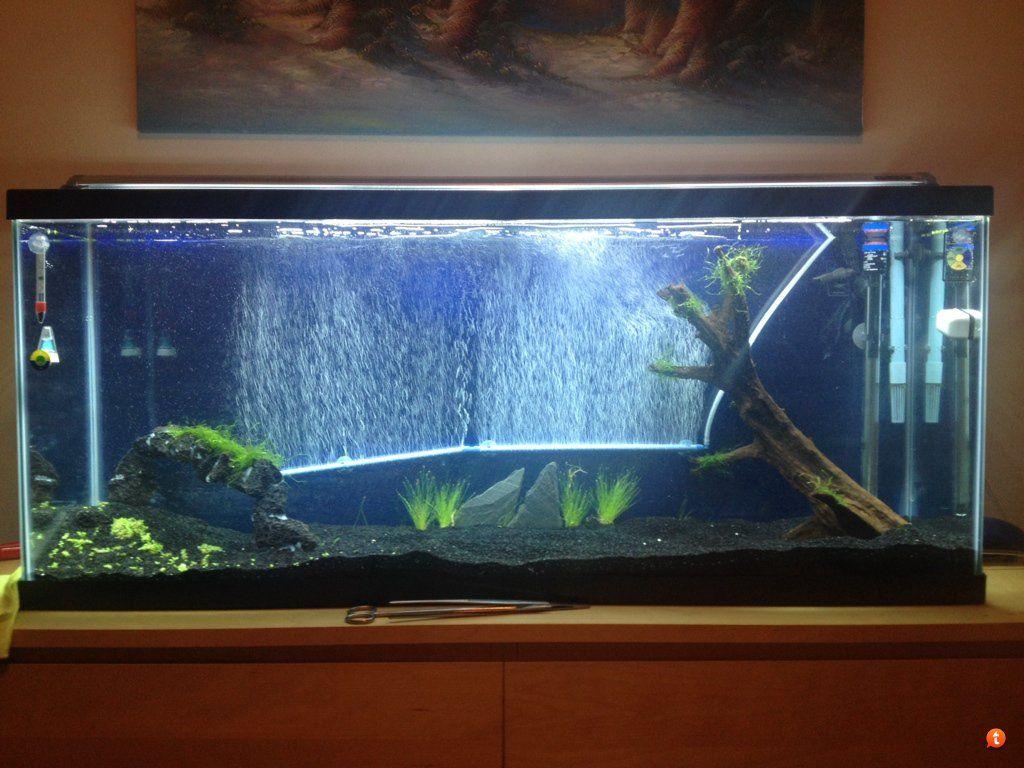 Pin By Juan Pablo Atehortua On Aquariums And Aquascaping Aquarium Nano Aquarium Fish Tank