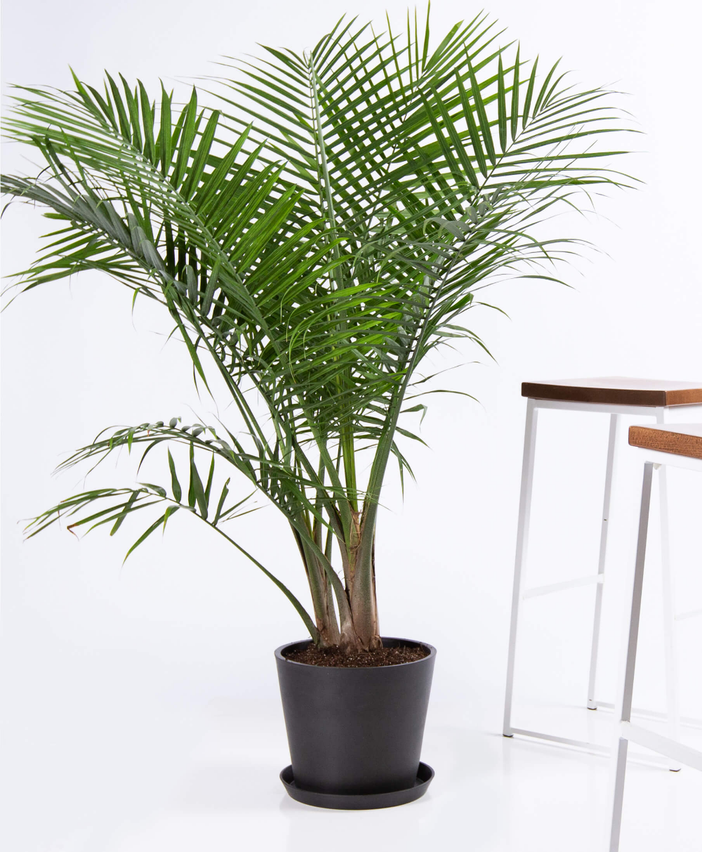 Large-Indoor-Plants