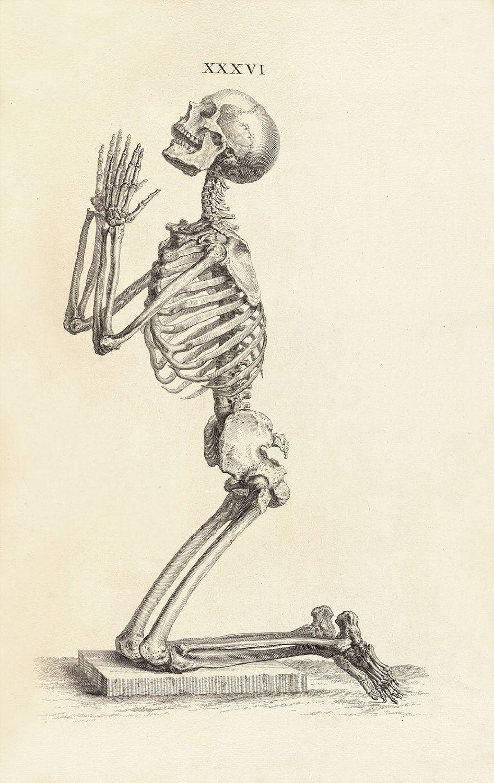 Image result for the human skeleton vesalius