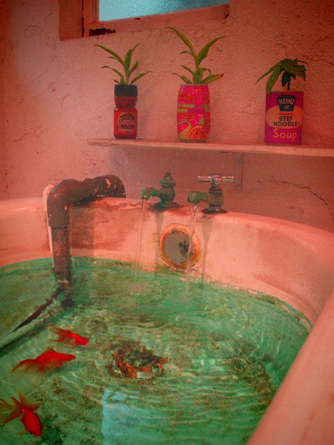 I Really Like The Idea Of Using An Old Bathtub As A Fish Pond