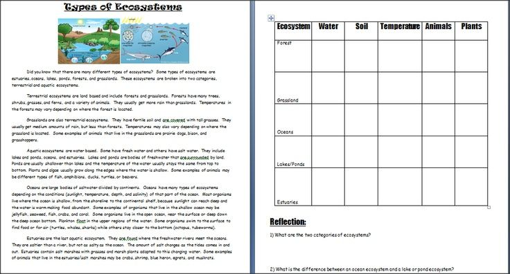 Image Result For Ecosystem Worksheets 5th Grade Science
