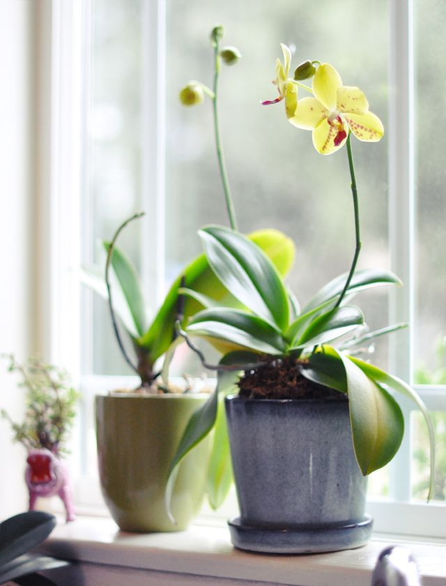 How To Regrow Orchids I Could Ve Used This A Few Weeks Ago Ahh
