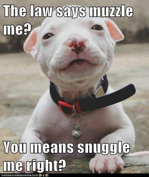 look at that face! never muzzle!