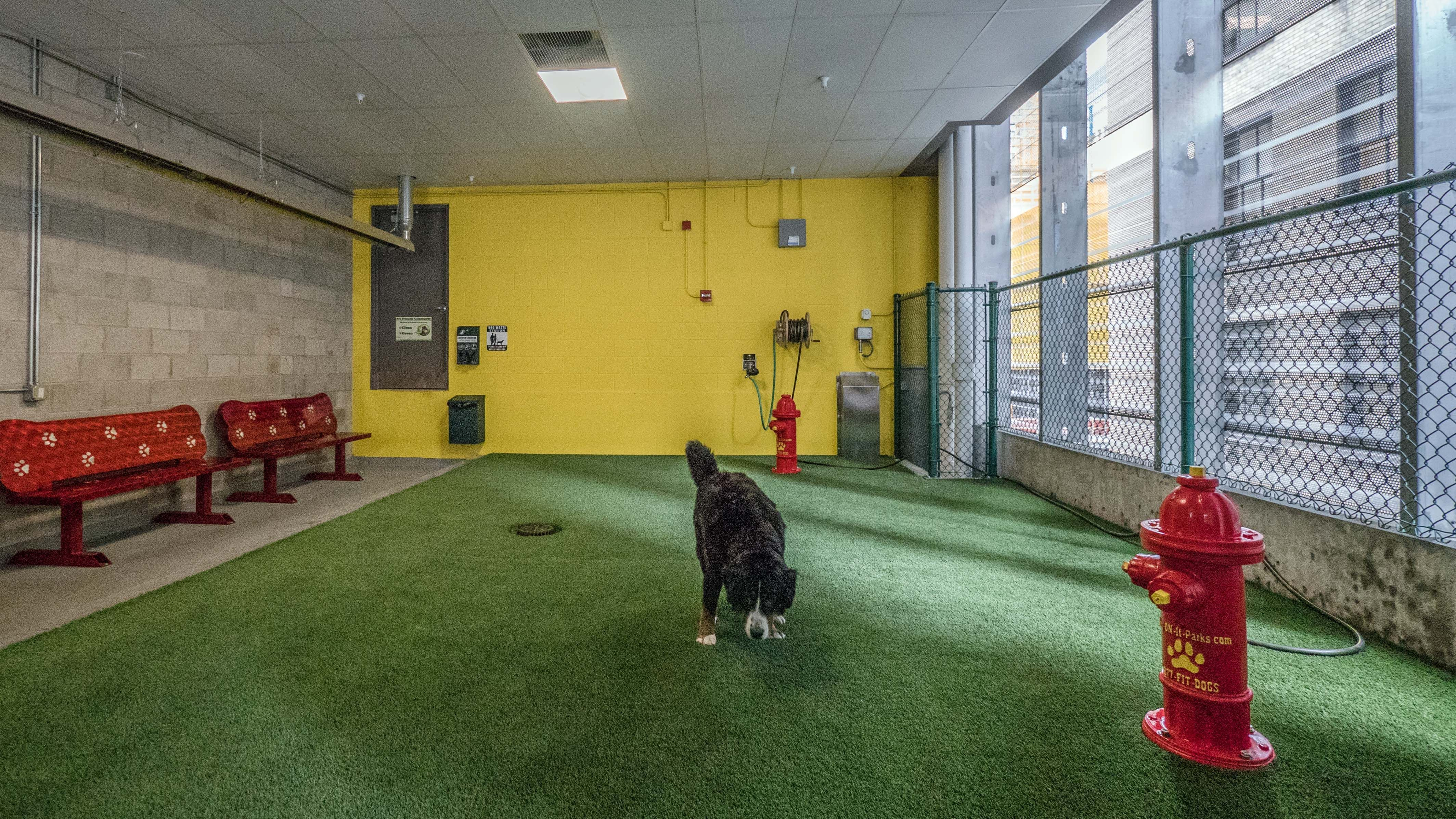 Image Result For Rooftop Dog Park Dog Area Apartment Dogs Pet