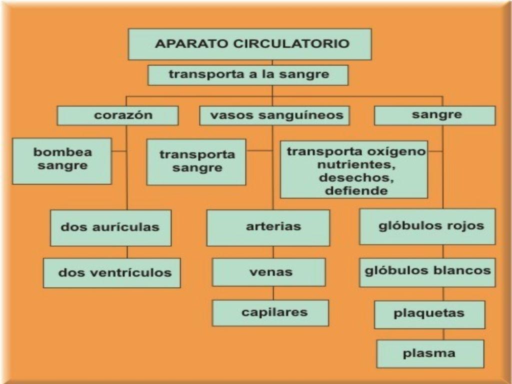 SISTEMA CIRCULATORIO - PRIMARIA | Naturales | Pinterest | Sistema ...