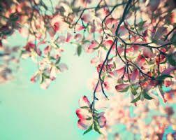 Risultati immagini per flower tree photography