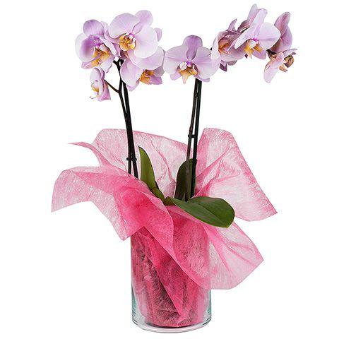 Dulzura: orquídea rosa con sisal
