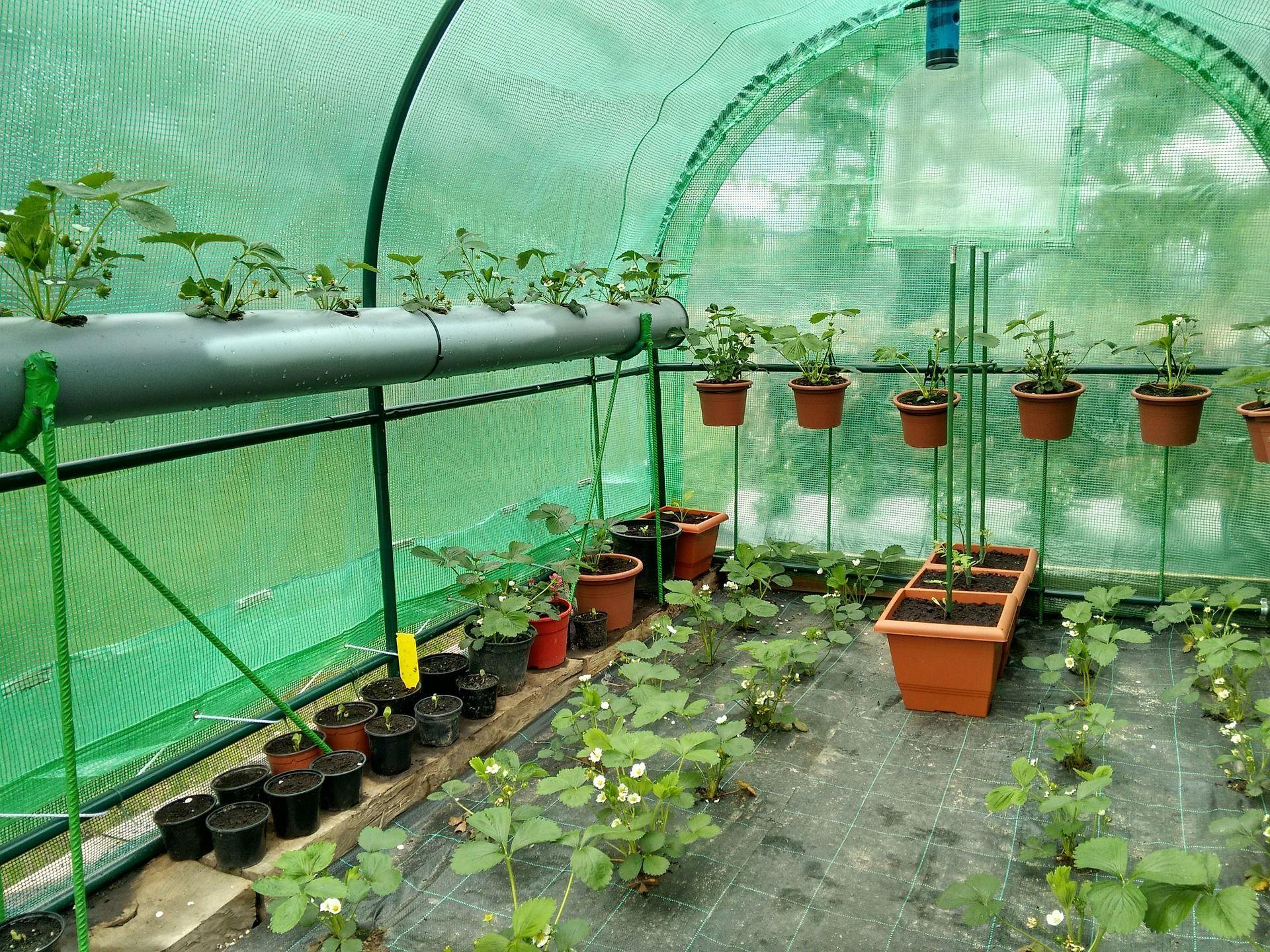 Gewächshaus bepflanzen: Anleitung für den Gemüseanbau #anbauvongemüse