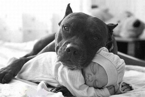 Image result for baby with pitbull