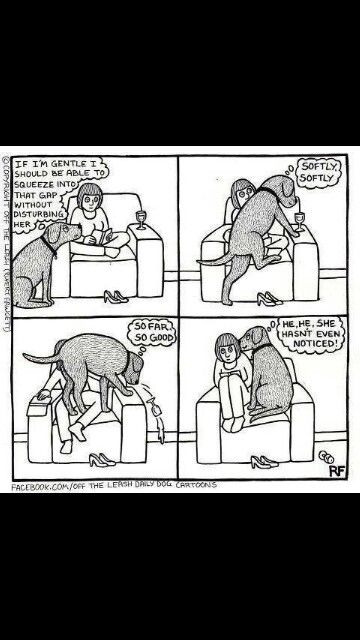 BOTH my dogs..