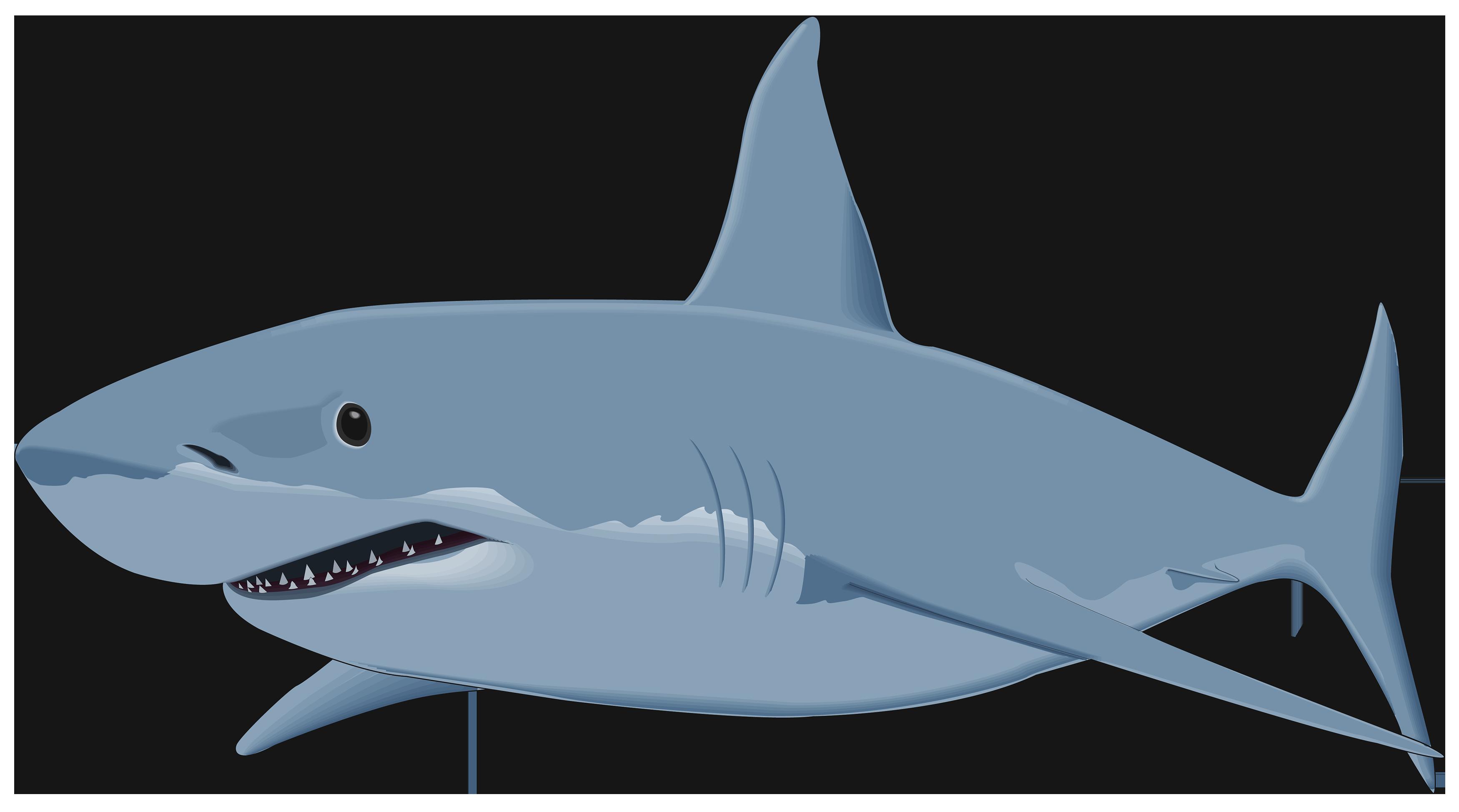Shark Png Shark Images Shark Attack Clip Art