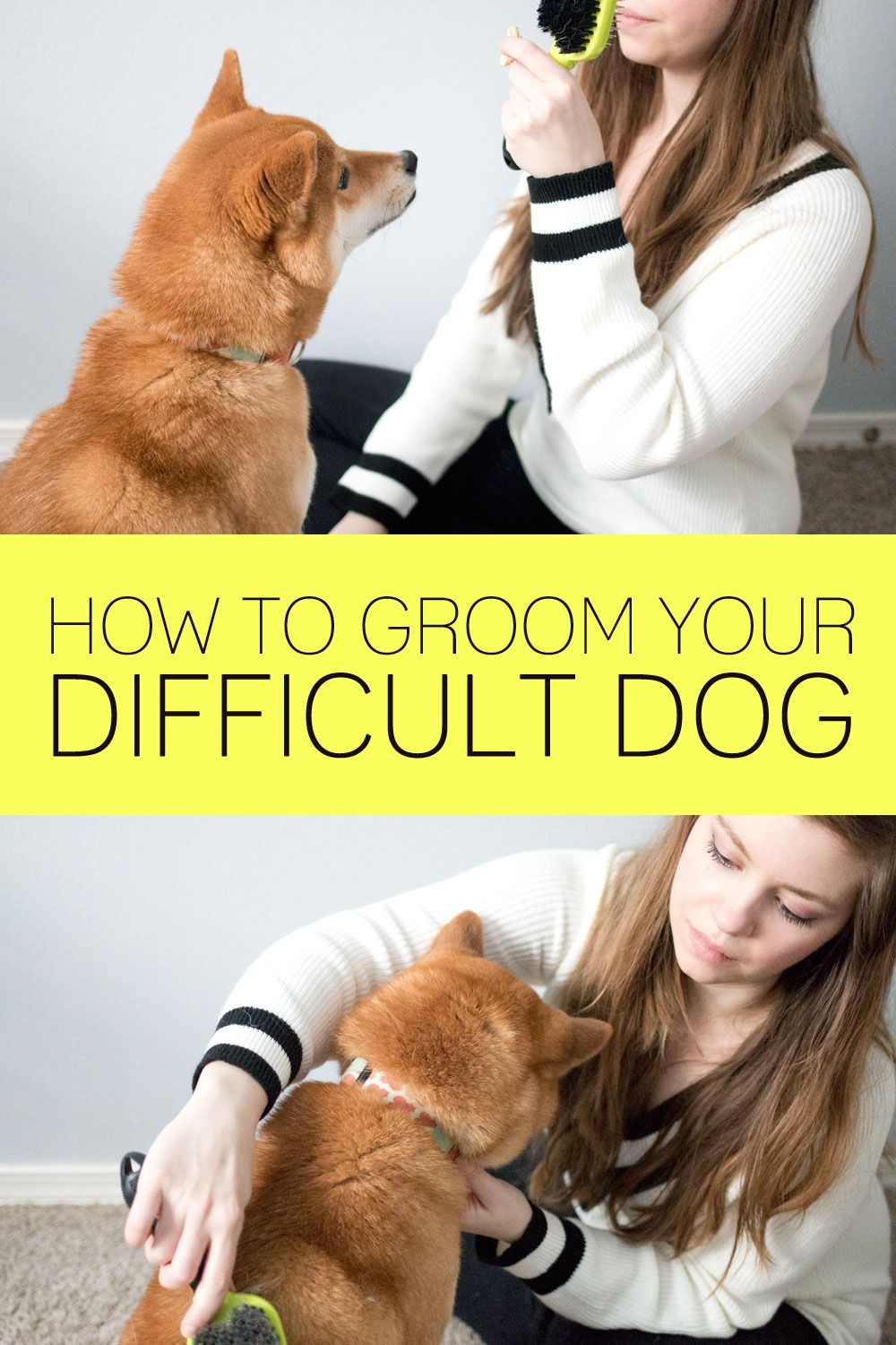 How To Groom A Difficult Dog Hellorigby Com Dog Grooming Dog