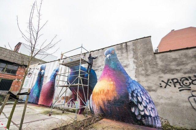 Giant Pigeons Murals Street Art Art Murals Street Art Art