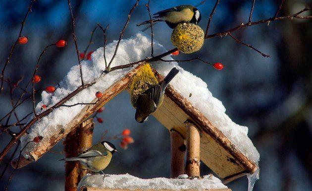 Krmte ptáčky