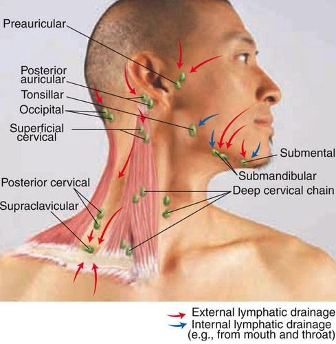 Submental lymph node akbaeenw submental lymph node ccuart Image collections