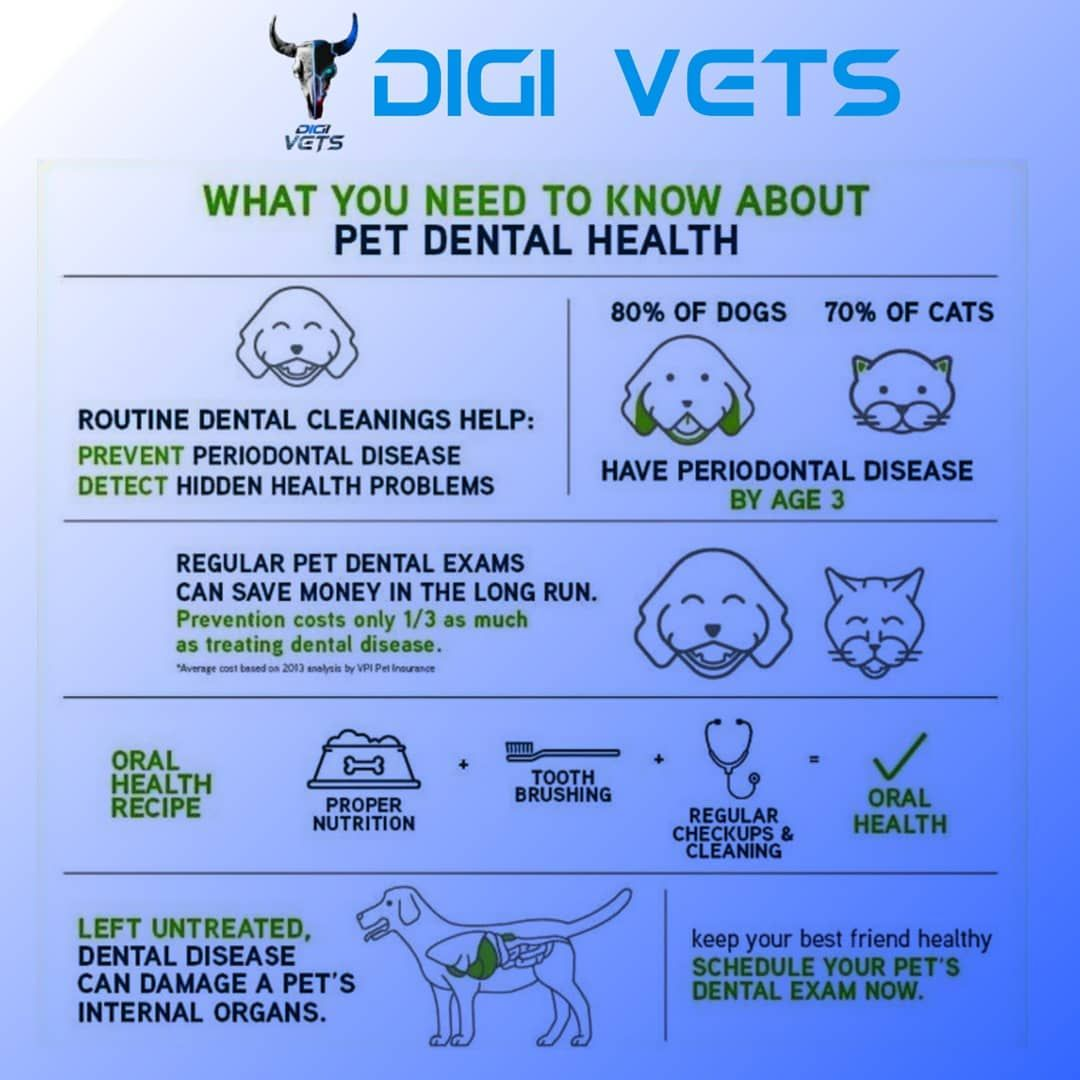 Digi Vets What You Need To Know About Pet Dental Health Credit To Respective Owners Follow Us F In 2020 Pet Dental Health Dental Health Dental Exam