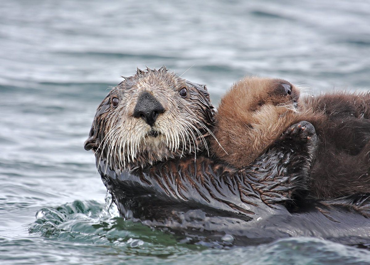 Kamchatka Seaside Cruise Journeys - A Marine Adventure