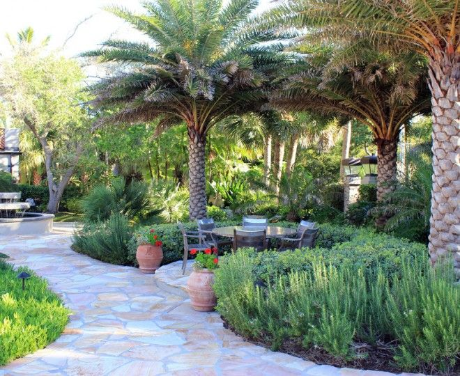 Beautiful Robellini Palm Convention Tampa Tropical