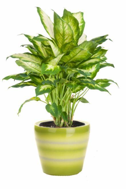 Les Meilleures Plantes D'intérieur À Faible Luminosité