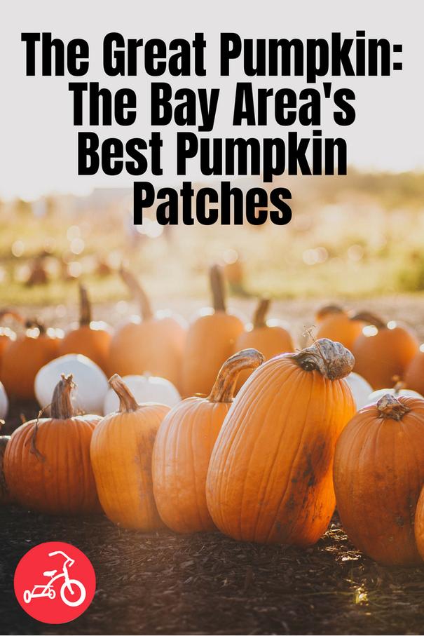 The Great Pumpkin The Bay Area S Best Pumpkin Patches Best Pumpkin Patches Pumpkin Patch The Great Pumpkin Patch