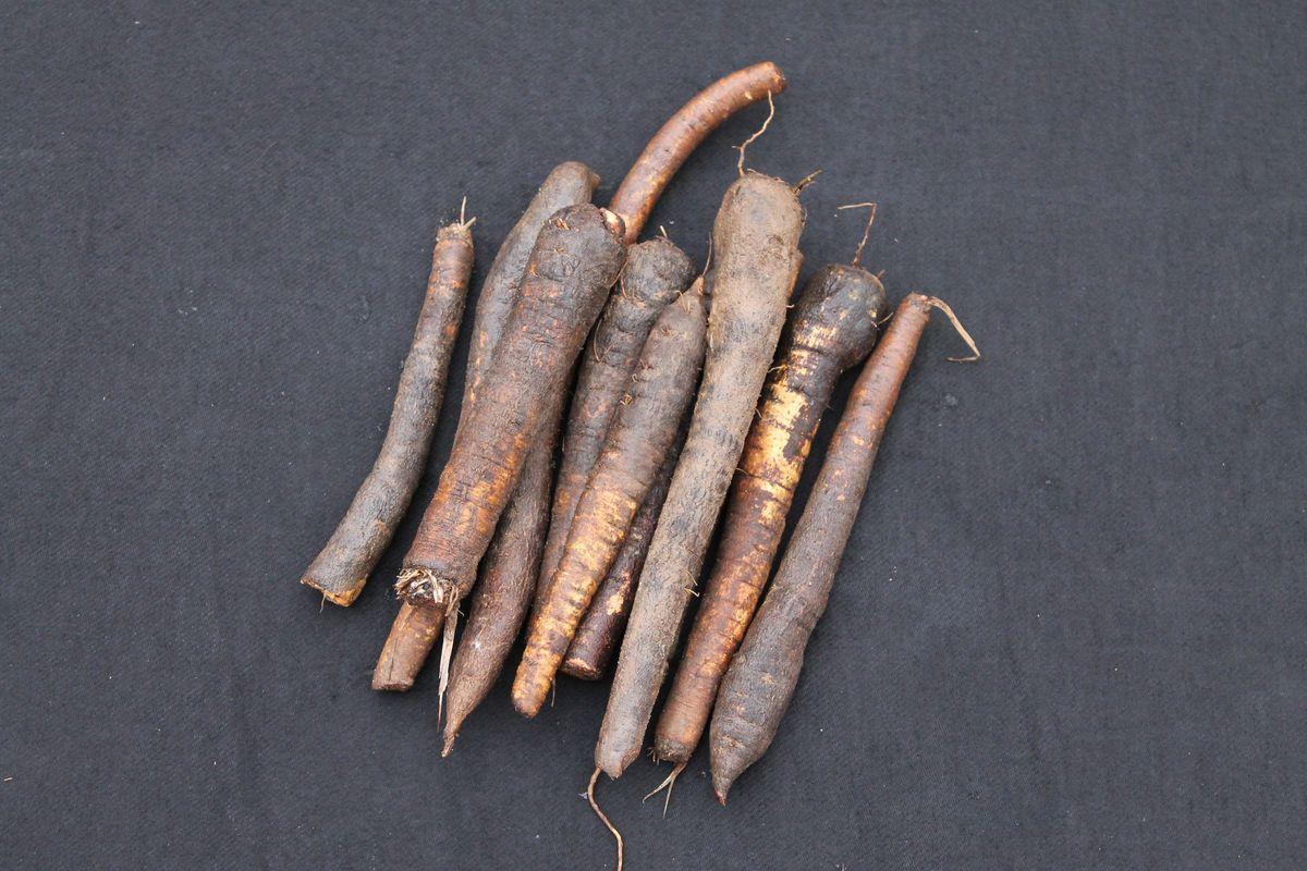 Schwarzwurzel Scorzonera Hispanica Schwarzwurzel Gemusepflanze Pflanzen