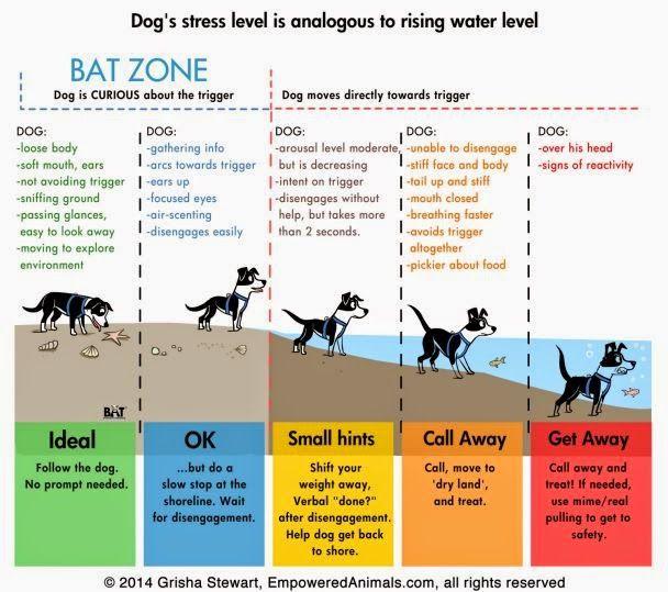 Dog S Stress Level Is Analogous To Rising Water Level Dog